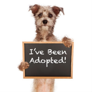Dog Holding An I've Been Adopted Sign